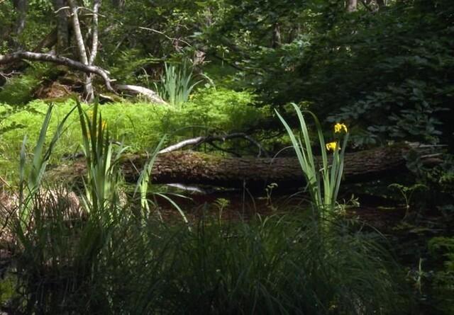Nytårsgave til naturen: Urørte skove vokser ekstra