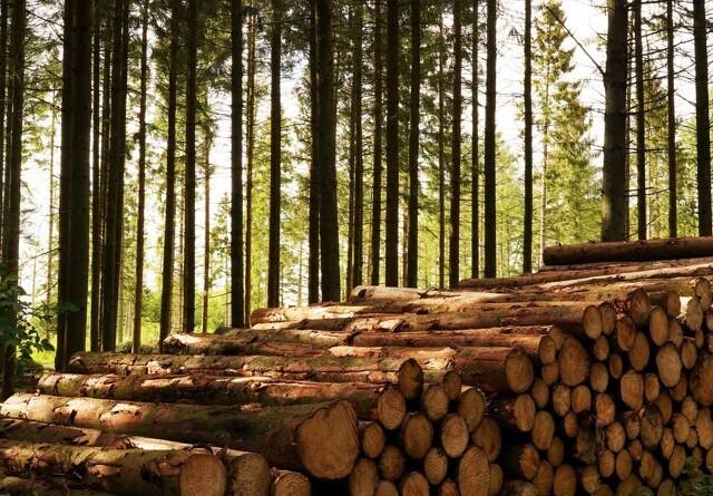 Byg bare løs - der er træ nok