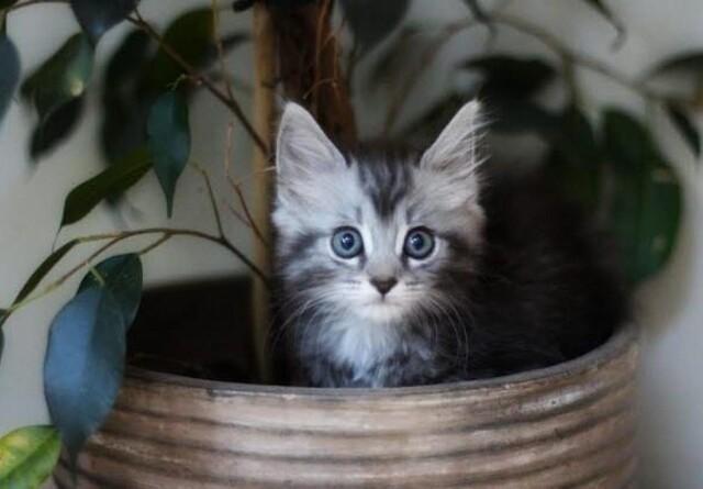 Forsikring er liv eller død for katte