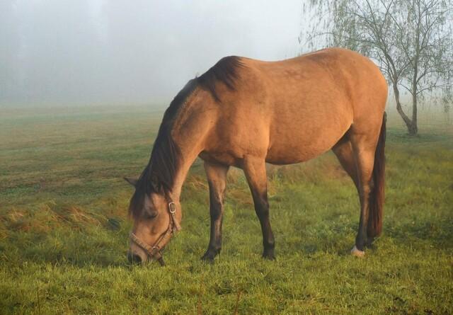 En foderplan til din hest er alfa og omega