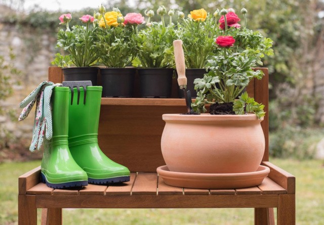 Sådan får du succes med dine planter i krukker udendørs