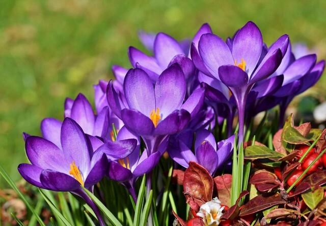 Haven i marts: Hvad kan du gå i gang med, og hvad bør vente?