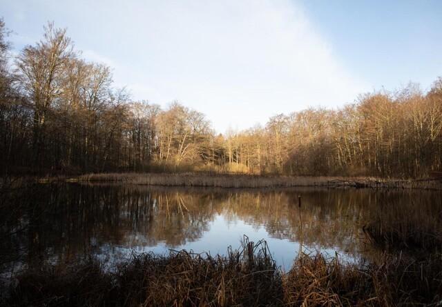 Meget mere urørt skov i 24 statsskove
