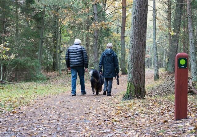 Danmark får flere og flere hundeskove