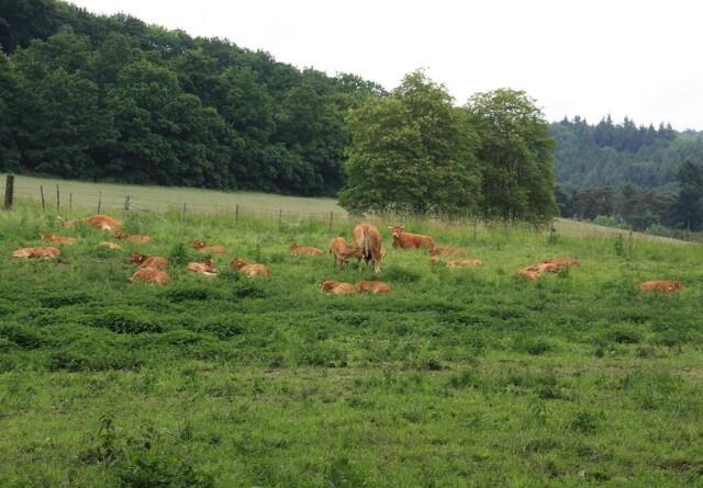 Naturstyrelsen er sigtet i sag om misrøgt af skovkvæg