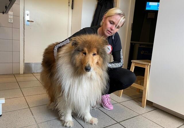 40 hunde og hvalpe reddet af Dyreværnet