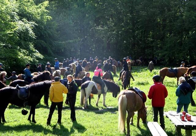 Ryttere og heste sammen mod indhegnet skov