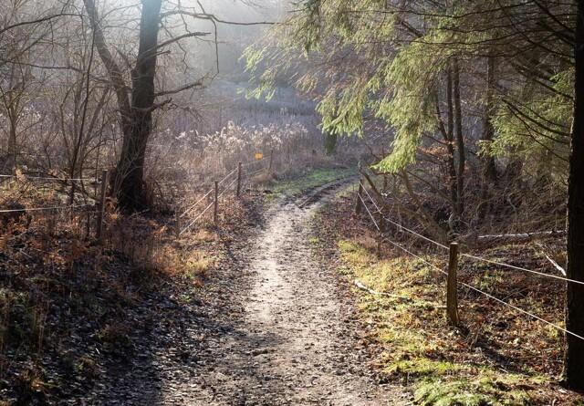 Nye skove på vej i hele landet