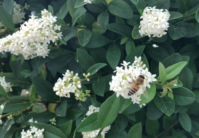 Lad hækken blomstre - for biernes skyld