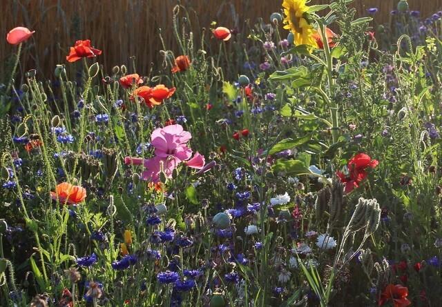Vilde blomster er godt for alle