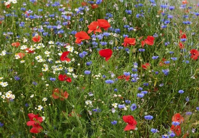Antallet af blomstermarker er femdoblet
