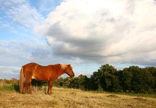 En overvægtig hest har det ikke godt