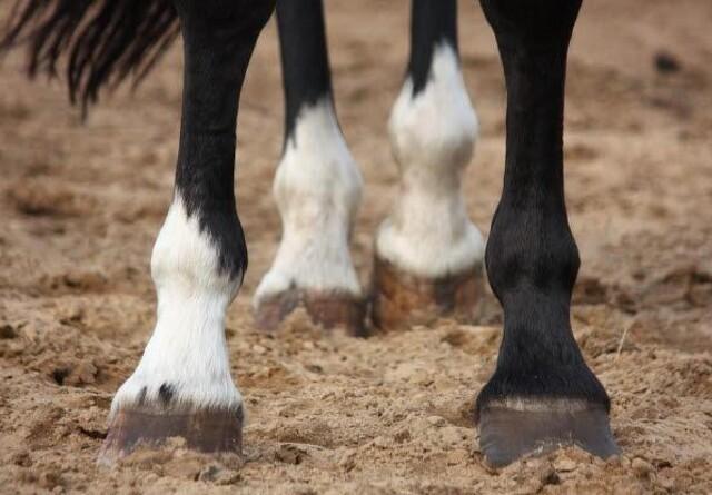 Sådan undgår din hest hudbetændelse og muk