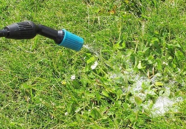 Sprøjtemidler i private haver bør forbydes