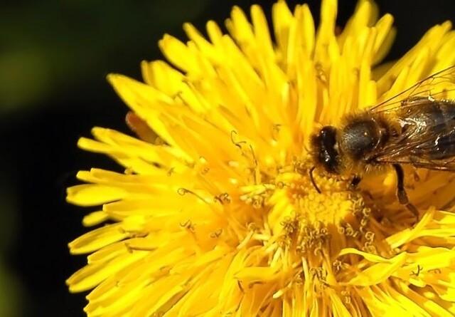 Alle vores bier har nu et dansk navn