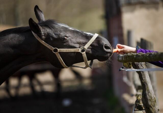 10 ting, du ikke må give hesten