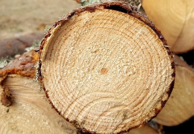 Fæld flere træer - for miljøets skyld