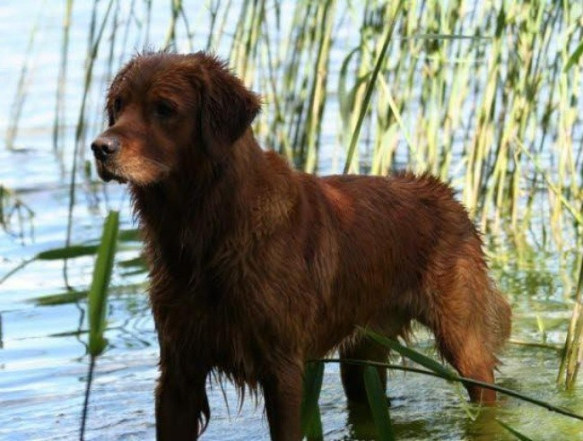 Hundens sikre sommer: 8 tips fra dyrlæge