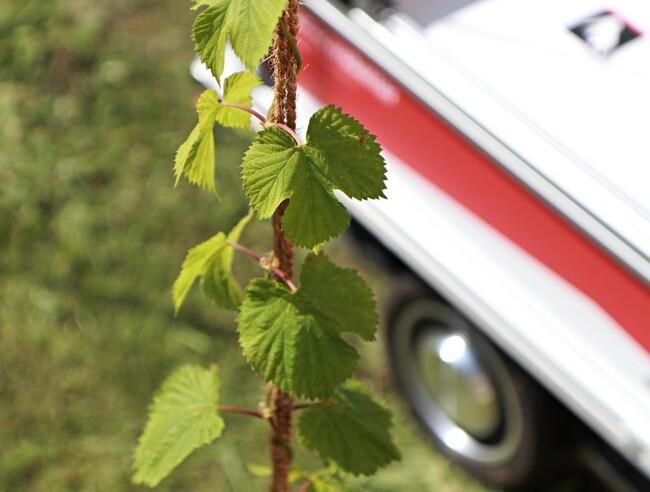 Ny robot skal give øl smagen af dansk jord