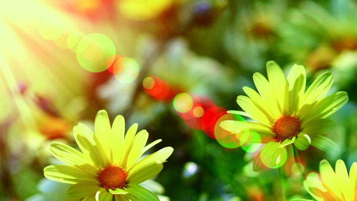 Solskin blomster til rollup