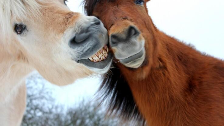 Sådan opdager du tandproblemer hos din hest