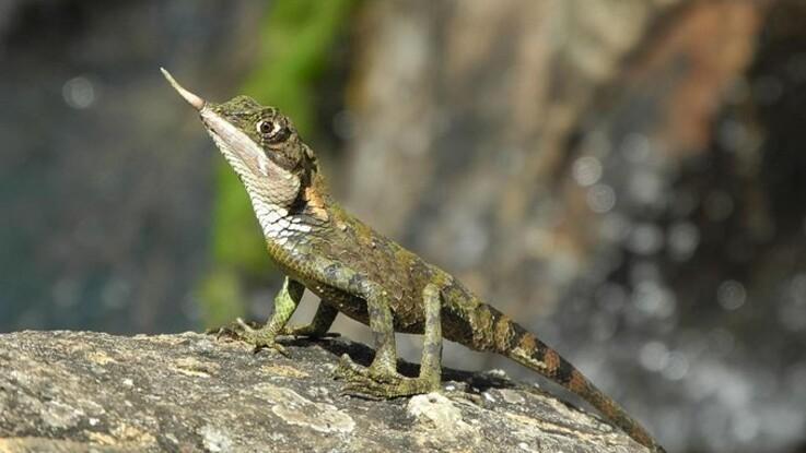 Listen med truede dyr og planter vokser