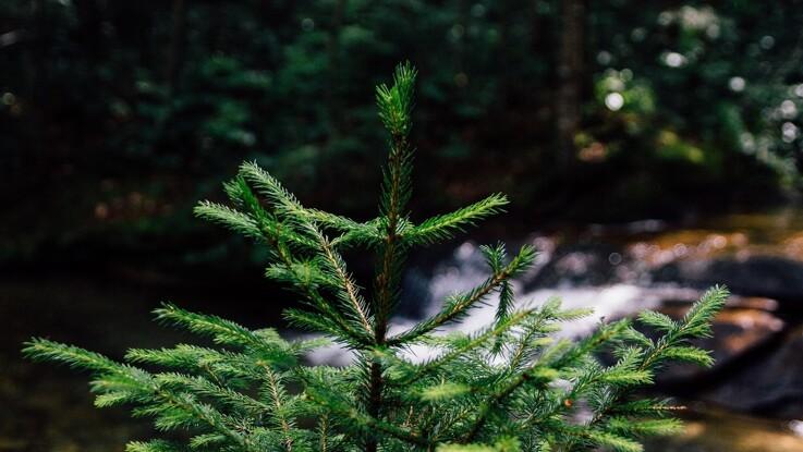 Sådan genbruger du juletræet