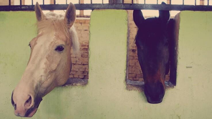 Gode råd til hestens pleje i januar