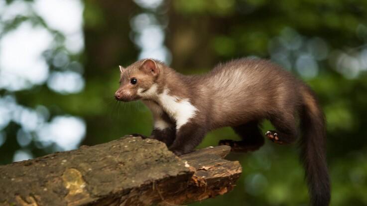 Flere danske dyr og planter er truede