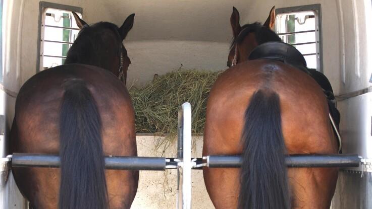 Dette skal du vide om trailerkørsel med din hest