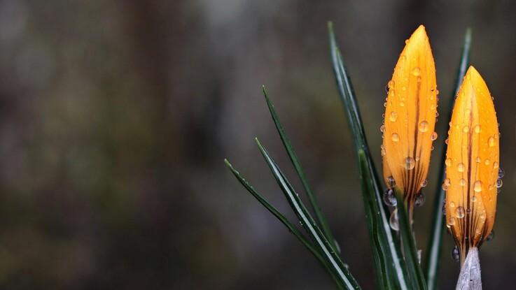 Mild vinter lokker havefolket frem