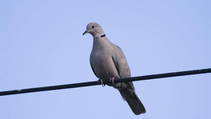 Miljøminister stopper jagt på fire fuglearter