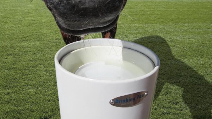 Frisk vand til hesten - hele tiden