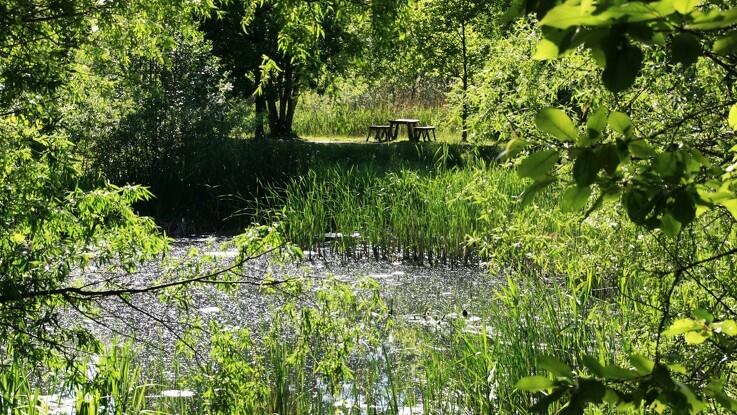 Ny skov skaber værdi og oplevelser fra dag ét