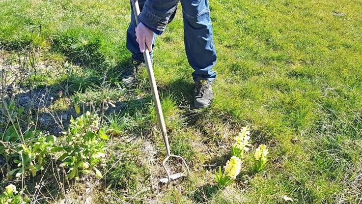 Brug hakkejernet - ikke pesticiderne