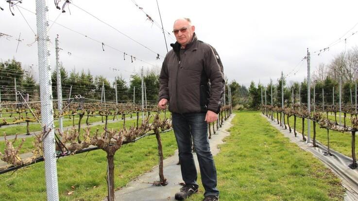 Nem guide til vin i haven