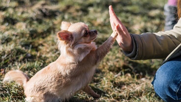 Kæledyr gør os mindre ensomme