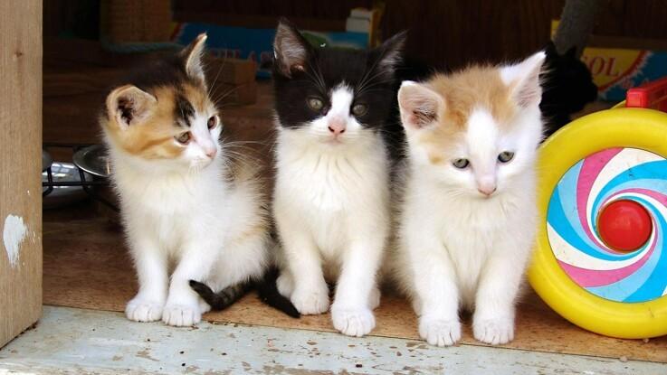 Ny ordning skal få flere til at registrere deres kat