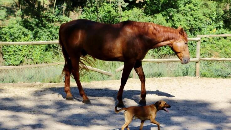 Heste og hunde forstår hinanden