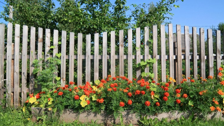 Vi er blevet bedre til at plante hæk og hegn