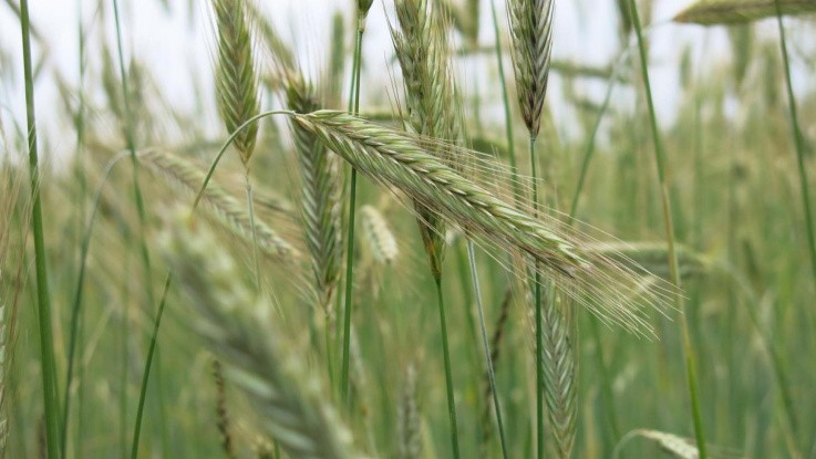 Alle landmænd skal kunne beregne gårdens klima-aftryk