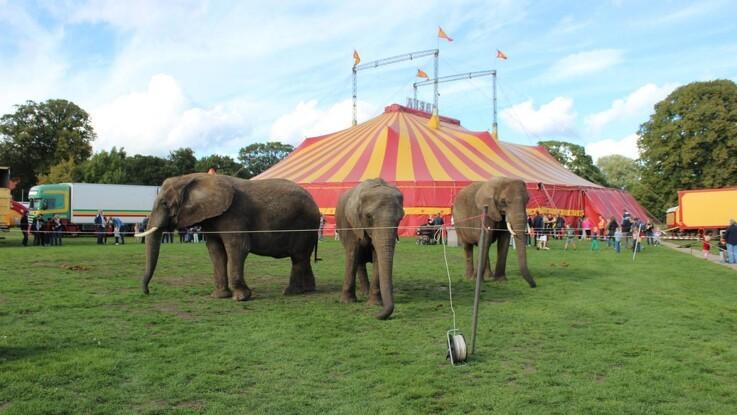 Kamp for vilde cirkusdyr slut