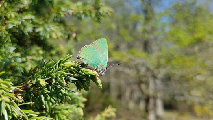 40.000 arter er nu på plads i Naturbasen