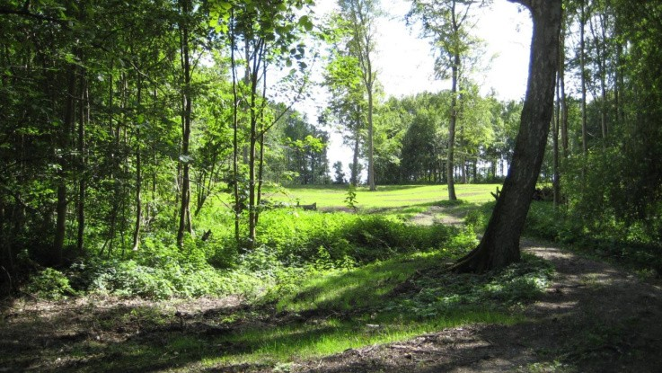 Samarbejde vil omdanne områder med lav naturværdi til sunde, danske skove