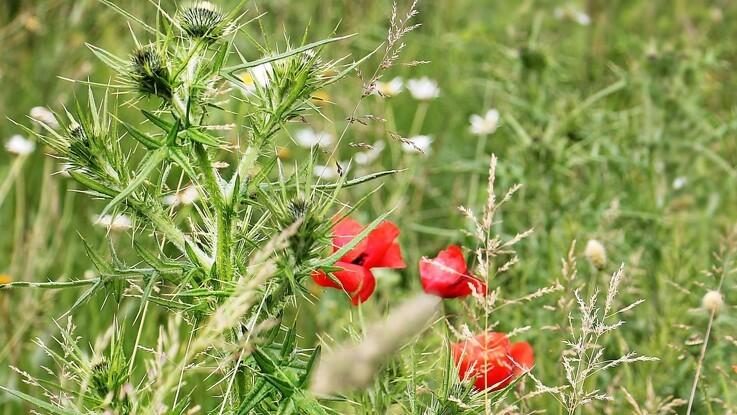 Markblomster gavner både bier og allergikere