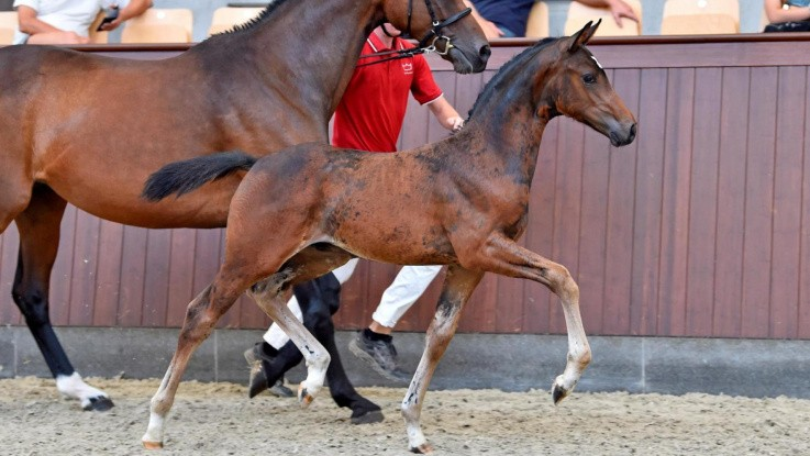 Mindre hesteauktioner er en succes