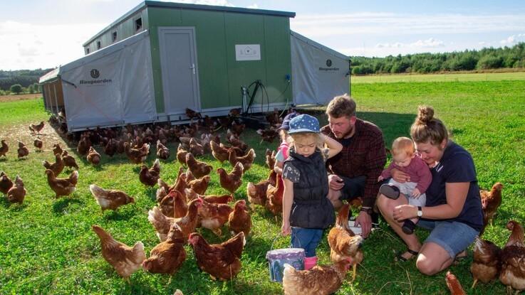 600 høns i transportabelt hønsehus