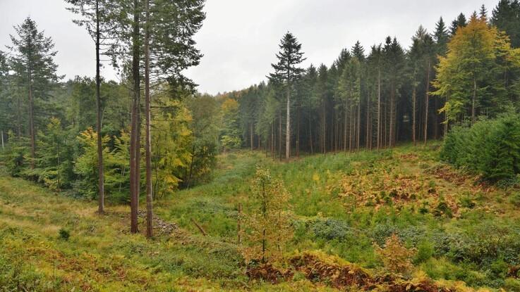 Ny stor skov på vej til fynboerne