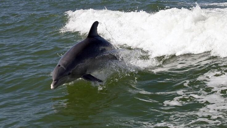 Hold afstand til delfinerne