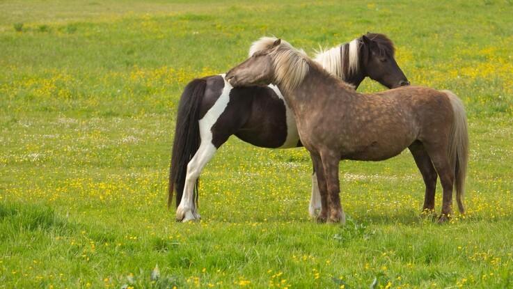 Her er alt du skal vide om at købe en hest
